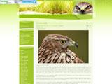 Хижі птахи України