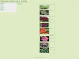 Декоративні рослини, кущі та хвойники